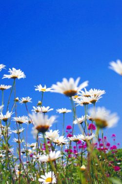 Spring Clean Your Heart!–Part One