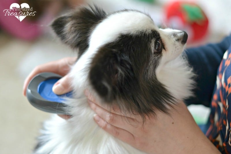 pets and flea treatments